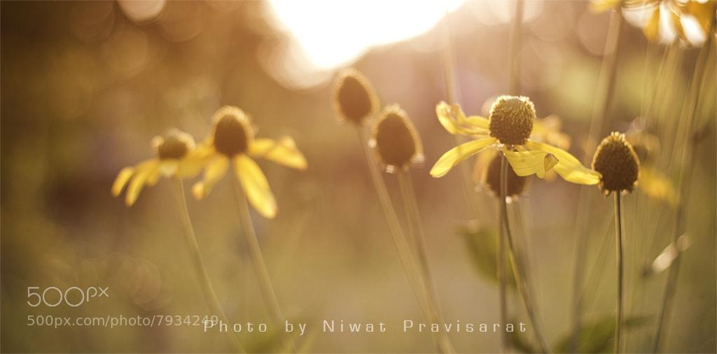Photograph Little Flower by Niwat Pravisarat on 500px