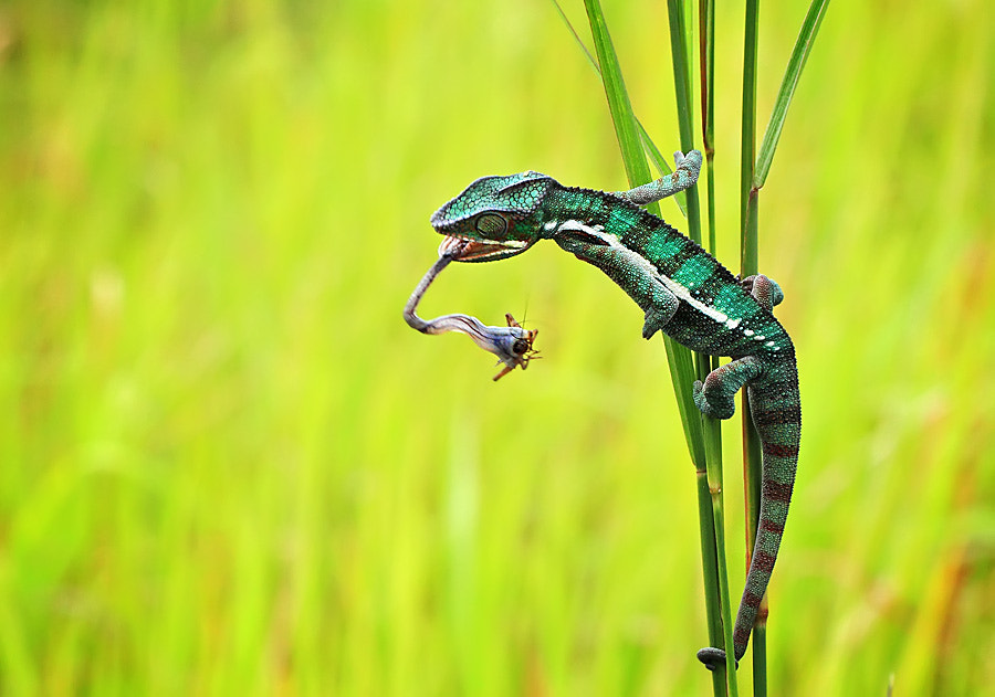 Photograph i got you by shikhei goh on 500px