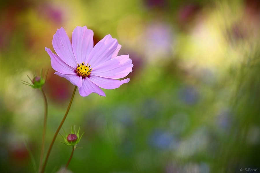 Photograph Spring by Stephane PERIN on 500px