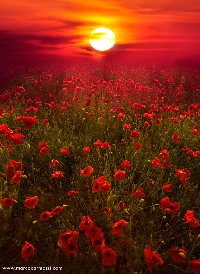 deep red by Marco Carmassi on 500px.com