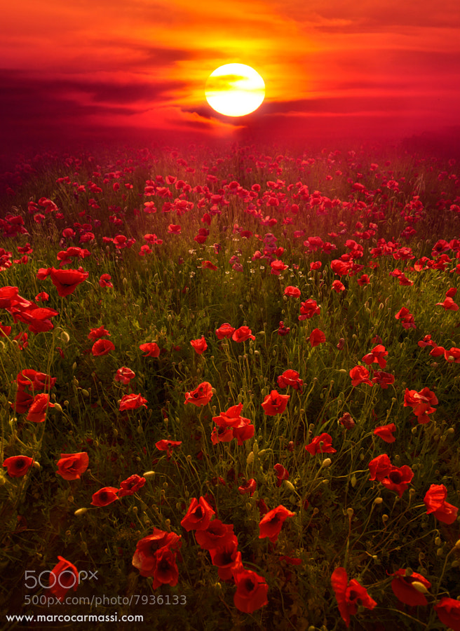 Photograph deep red by Marco Carmassi on 500px