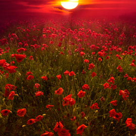 deep red by Marco Carmassi (MarcoCarmassi)) on 500px.com
