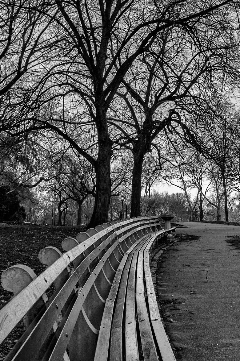 Photograph New York Central Park Bench by carlos restrepo on 500px