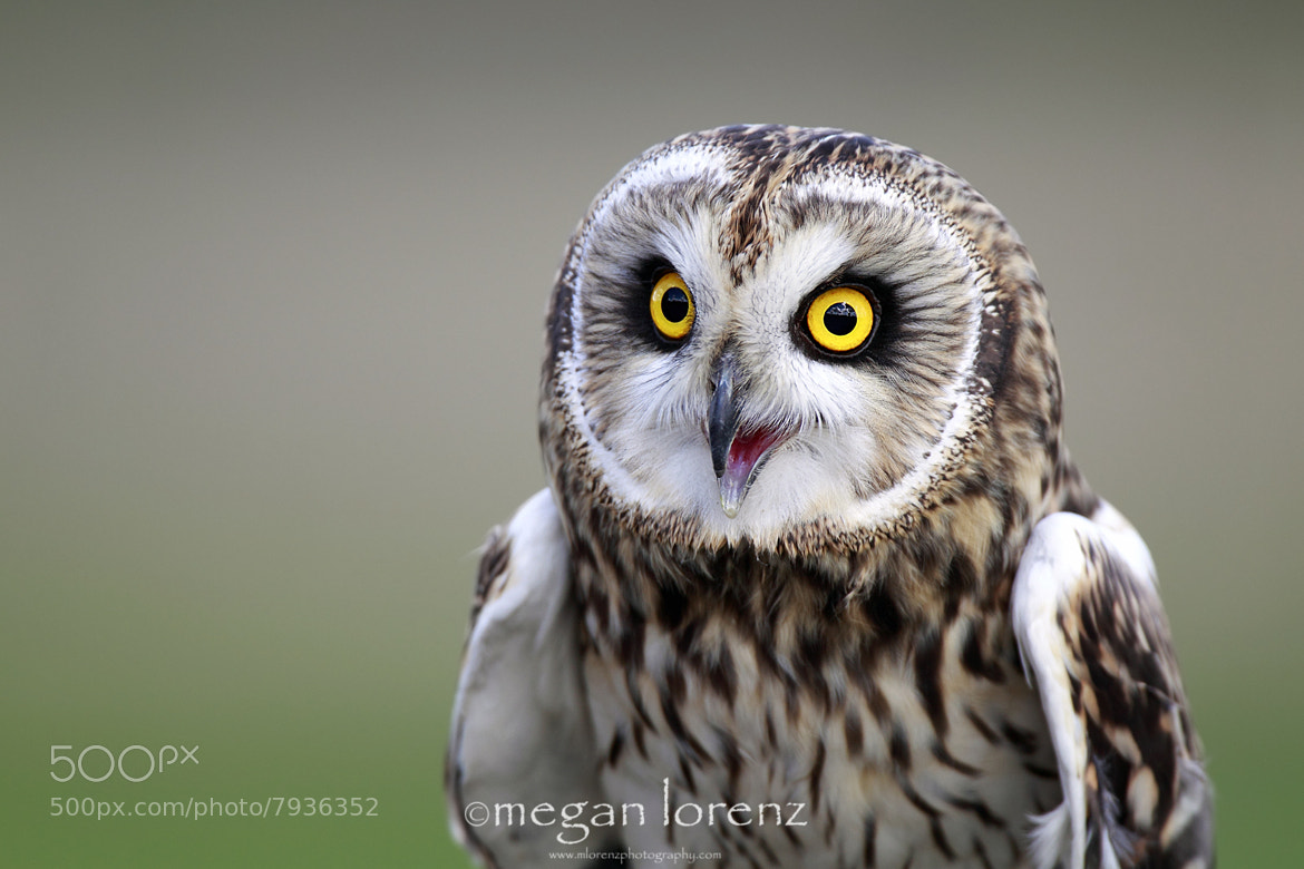 Photograph SEO by Megan Lorenz on 500px