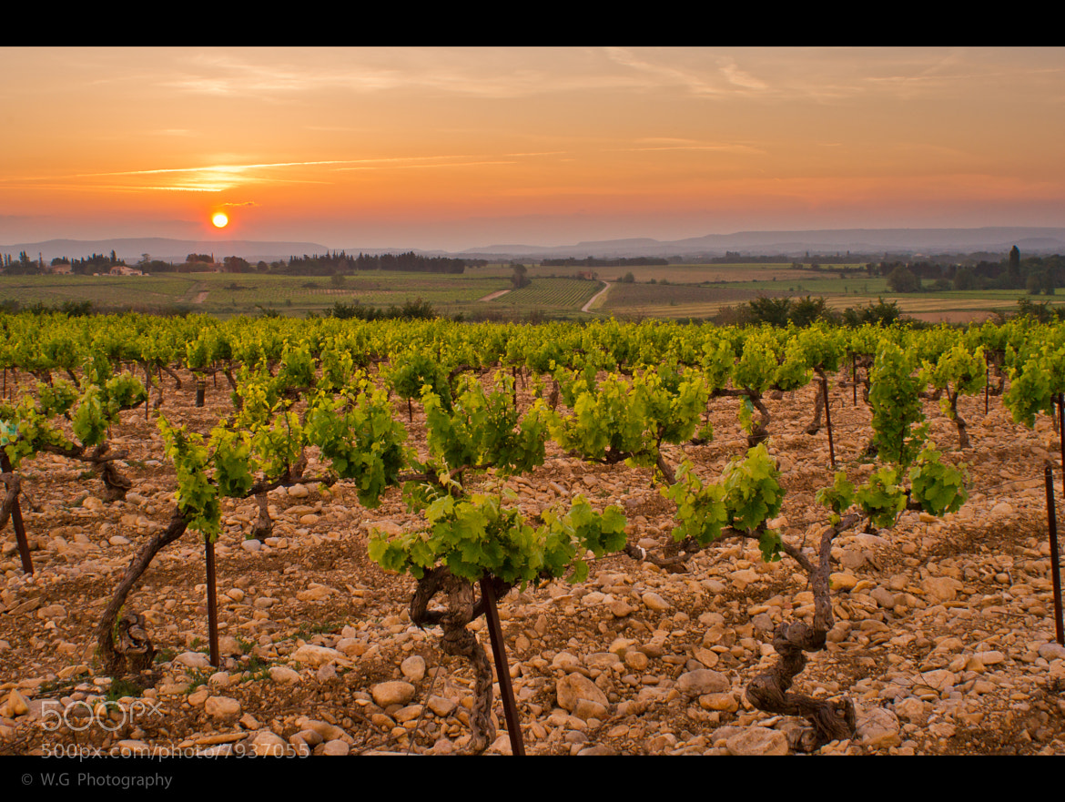 Photograph Vineyard #1 by Guillaume Weber on 500px