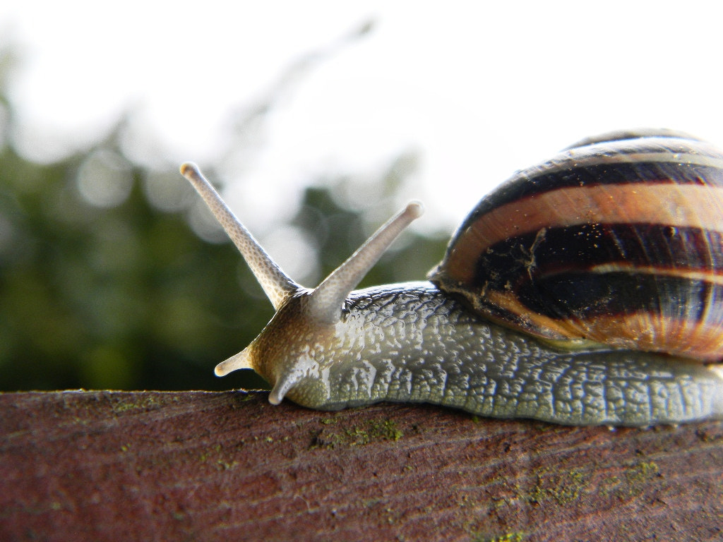 Photograph Snail  by Anne B on 500px