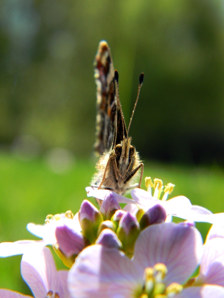 Photograph Butterfly on the flower by Anne B on 500px