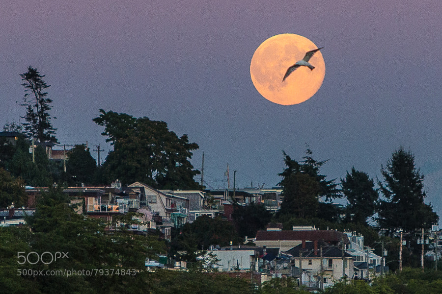 Photograph moonbird by elec neo on 500px
