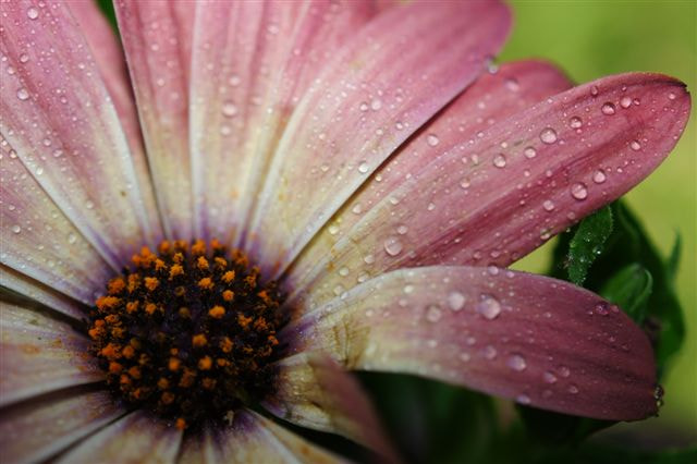 Photograph Morning Dew by Katherine Blake on 500px
