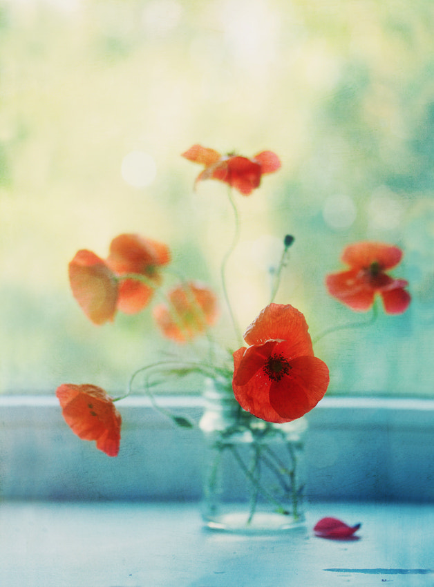 Photograph poppies. they are like butterflies :) by Yulia Pletinka on 500px