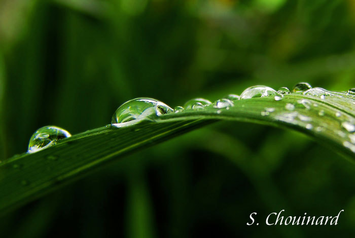 Photograph Summer pearls by Suzanne Chouinard on 500px