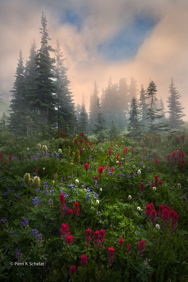 Morning Glory by Perri Schelat on 500px.com