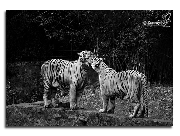 Photograph Wild Lovers by Sagarika Roy on 500px