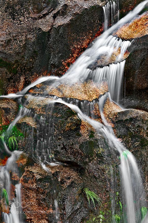 Photograph Gently falling by Fernando Almeida on 500px