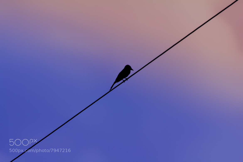 Photograph Twilight by Fernando Sousa on 500px
