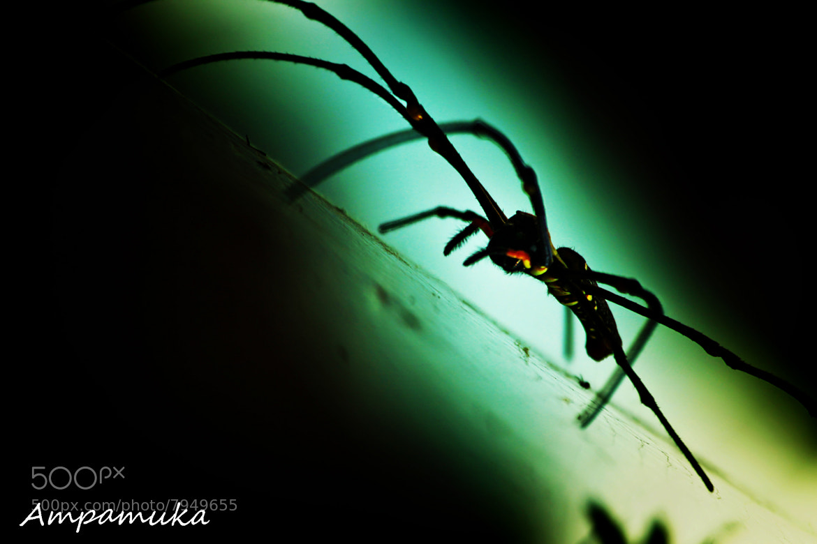 Photograph Shadow Killer by Suradej Chuephanich on 500px