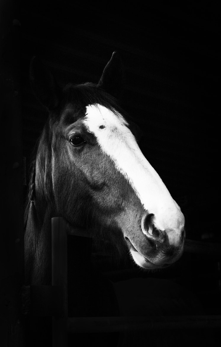 Photograph Horse by Landon Hill on 500px