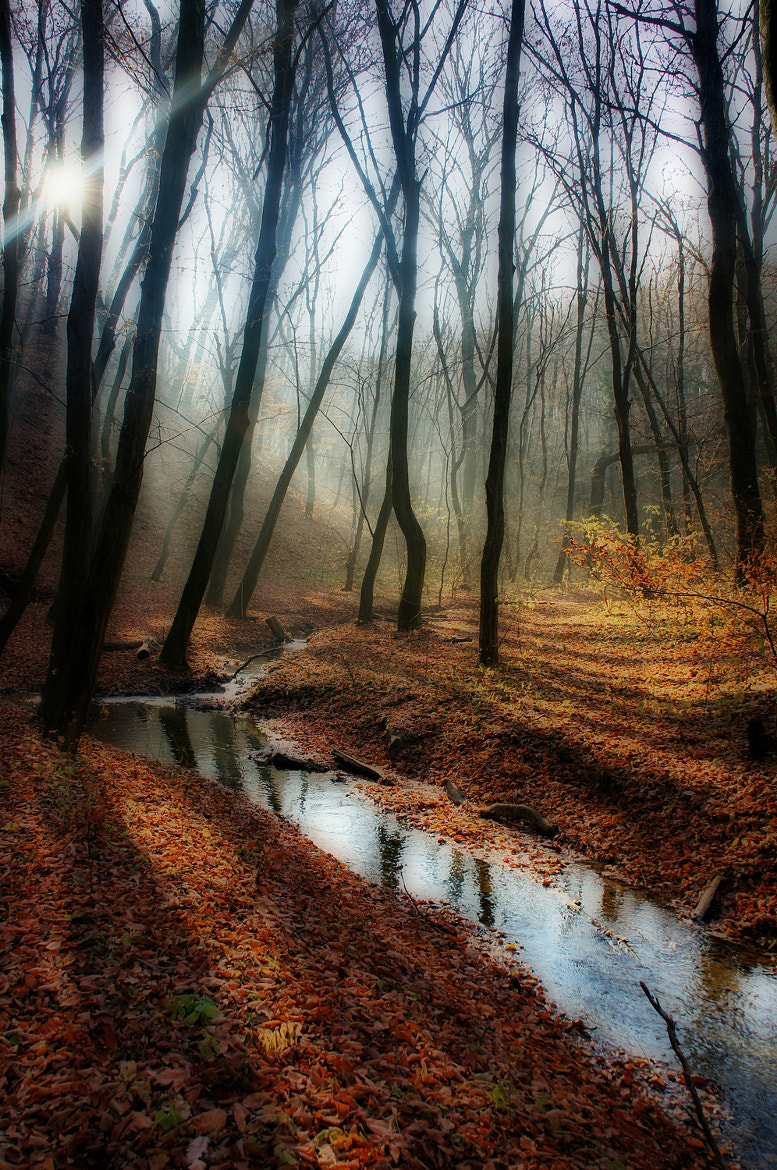 Photograph along the brook by Andy 58 on 500px
