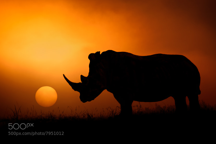 Photograph Rhino Sunrise by Mario Moreno on 500px
