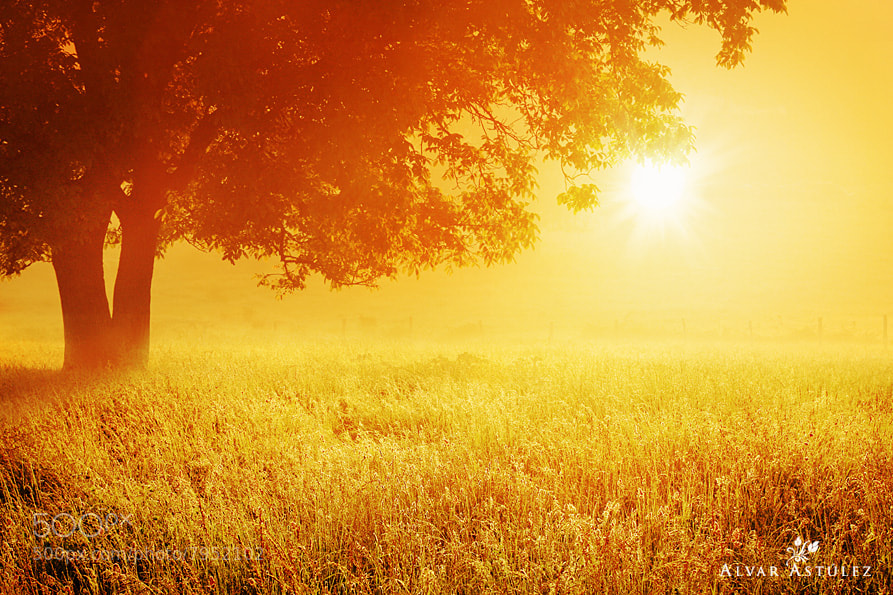 Photograph Golden fog*** by Alvar Astúlez on 500px