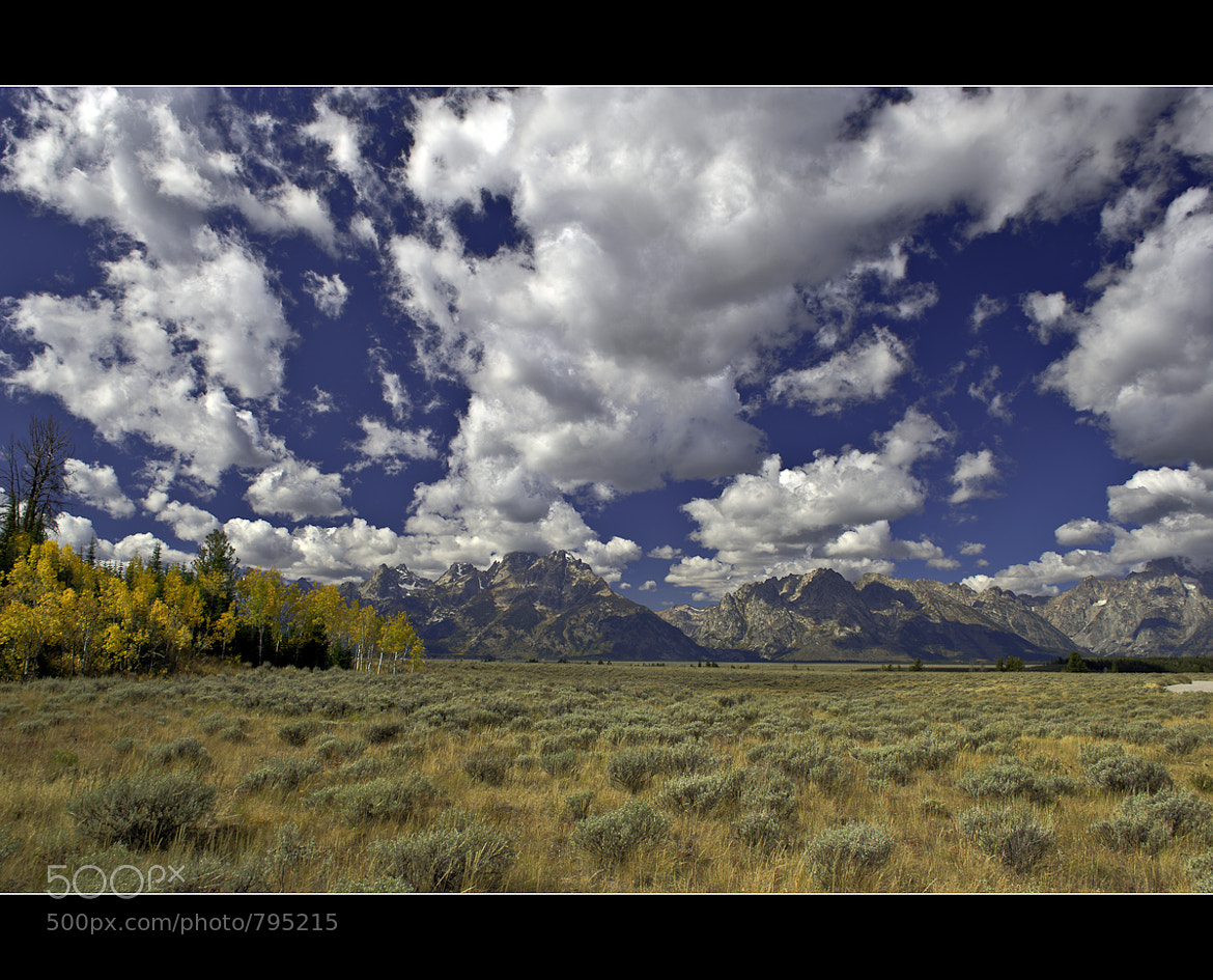 Photograph Aspens on the Plains by Wil Bloodworth on 500px