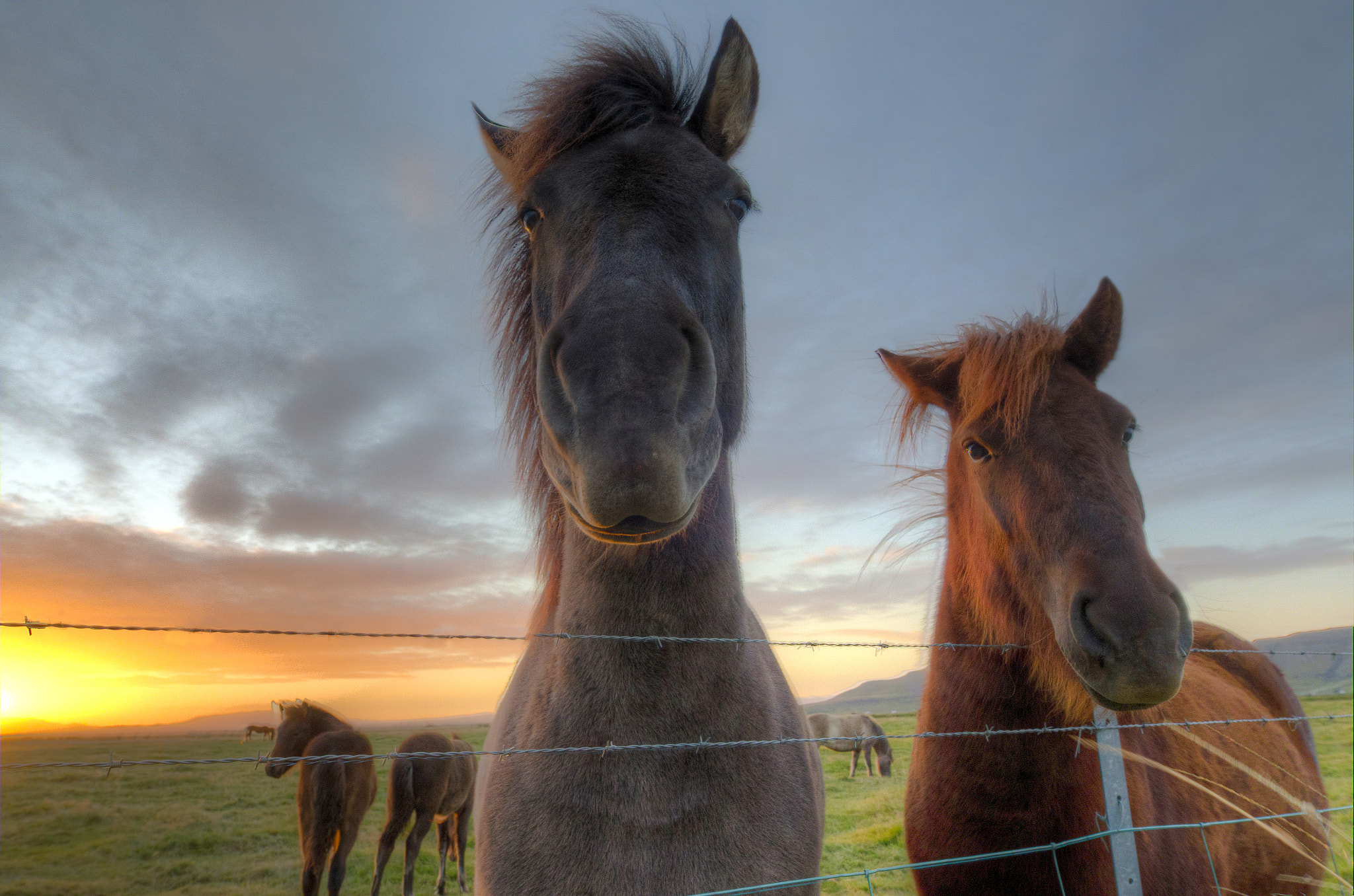 Photograph Horses, Iceland  by Ido Lempert on 500px
