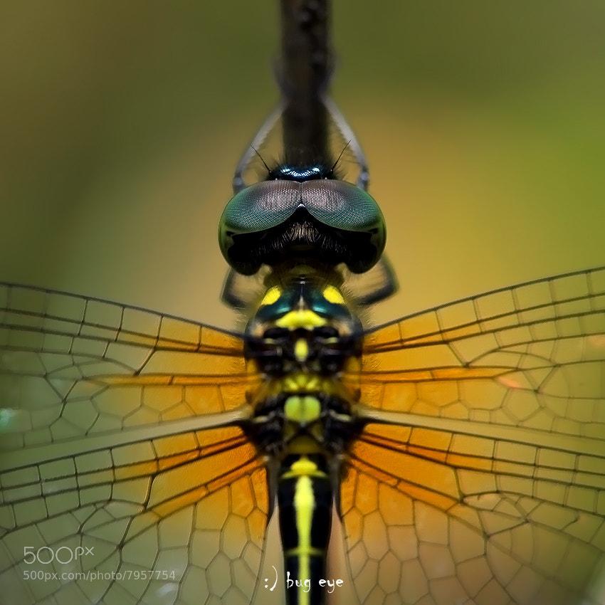 my back by bug eye :) on 500px.com