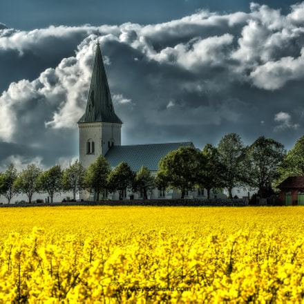 Rapeseed Redemption