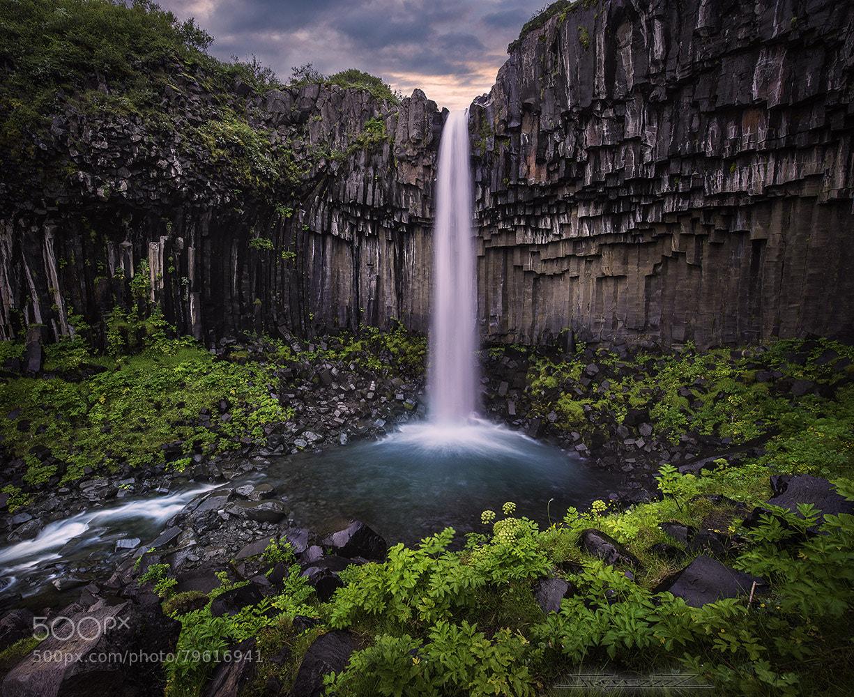 Aasop svartifoss, an icelandic waterfall cutting through a