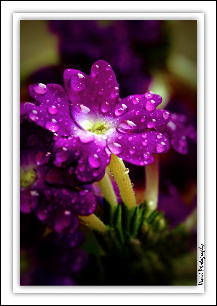 Photograph After the Rain by Judee Schofield on 500px