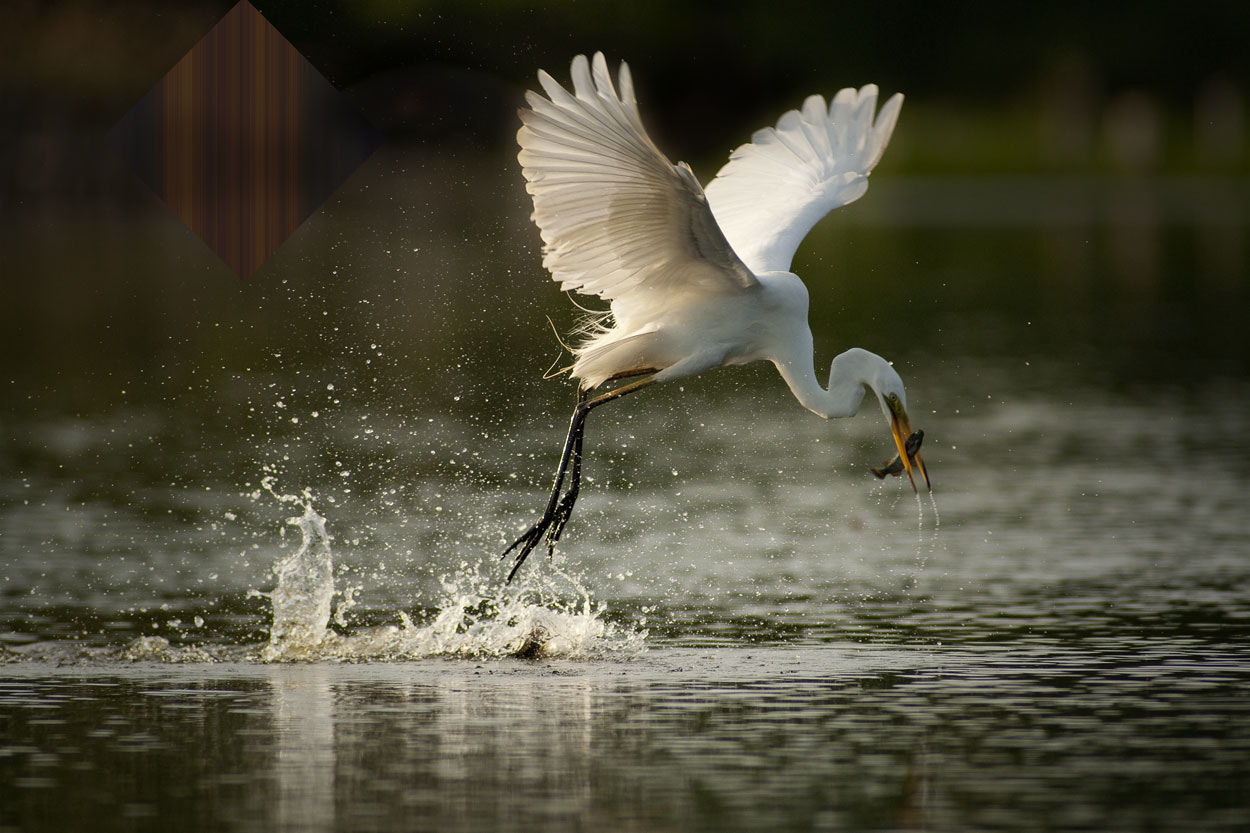 Photograph Great Catch by Iwan Tirtha on 500px
