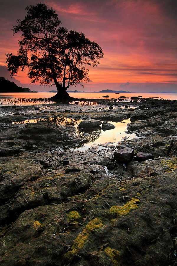 Photograph waiting for the redness sky by Dewi Oktavia on 500px
