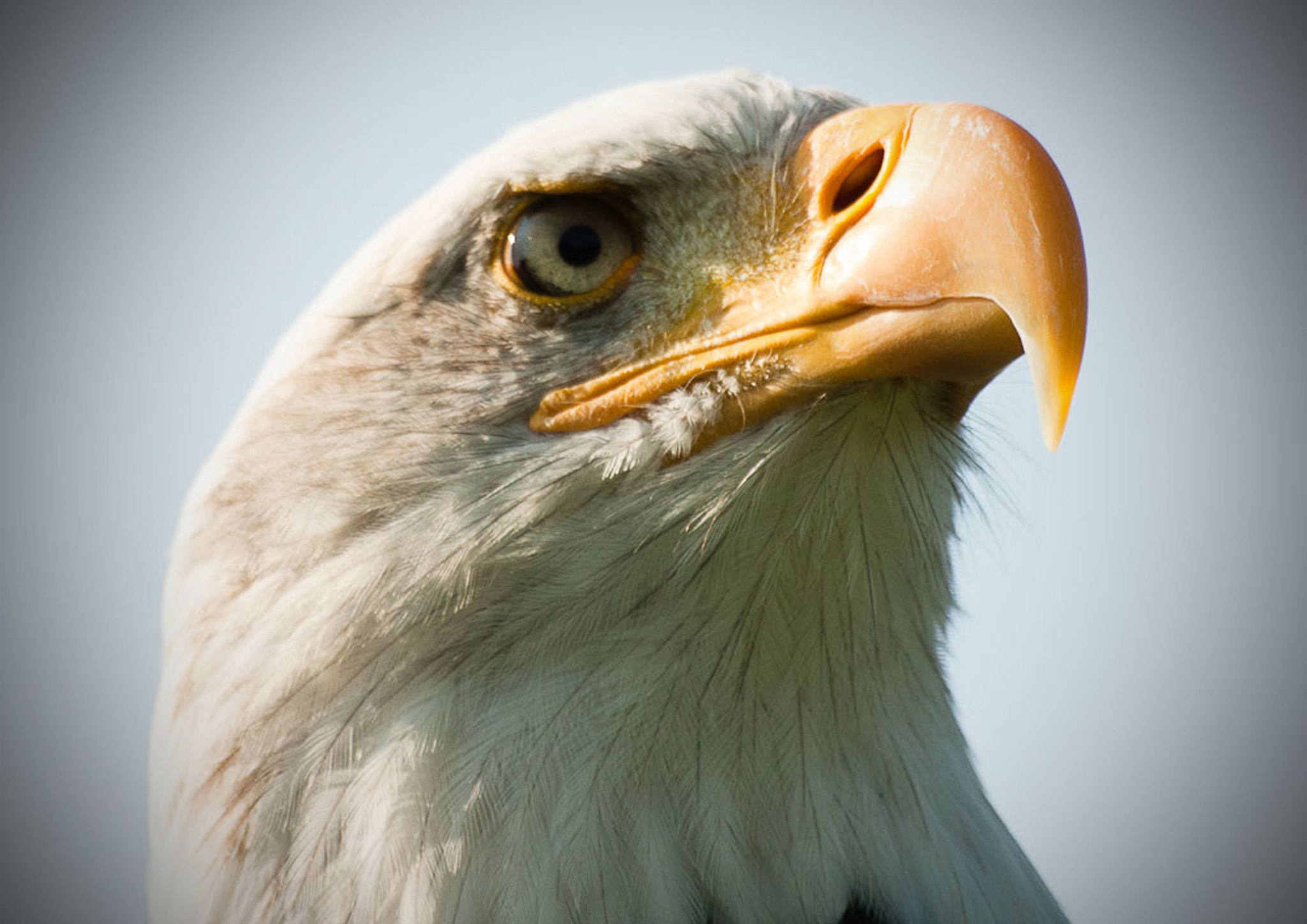 Photograph Eagle eyes by Paul Howcroft on 500px