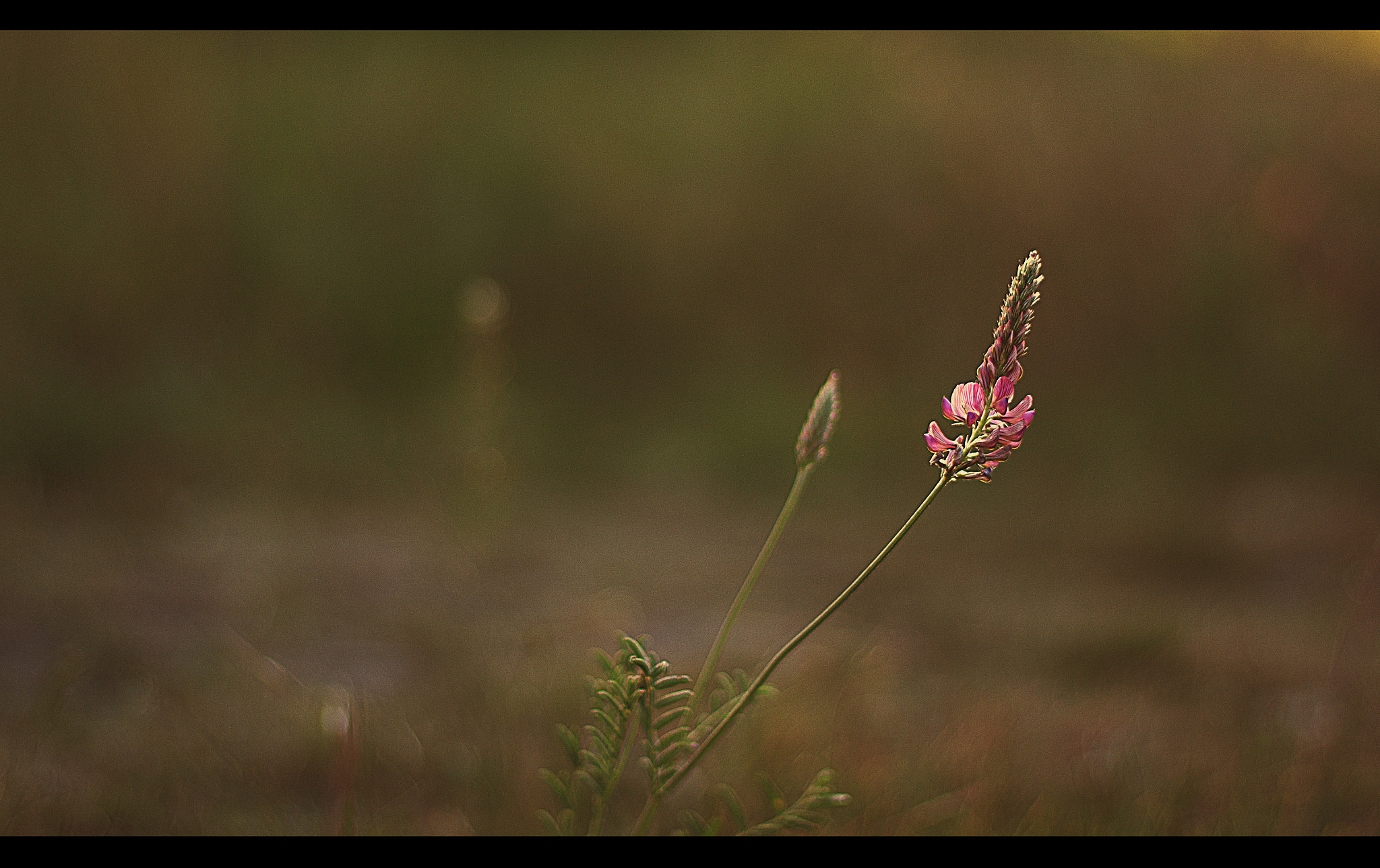 Photograph say it with flowers by Benjamin Ramser on 500px