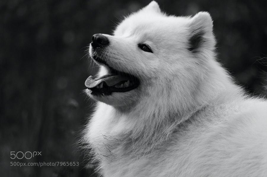 Photograph *** by igor pilshikov on 500px