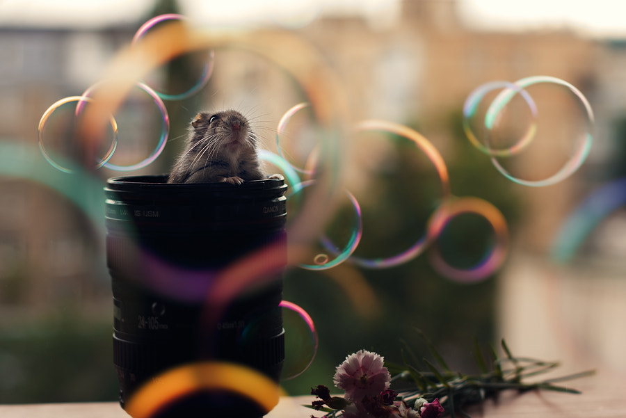 Photograph I love bubbles by c o m p a s s ) on 500px