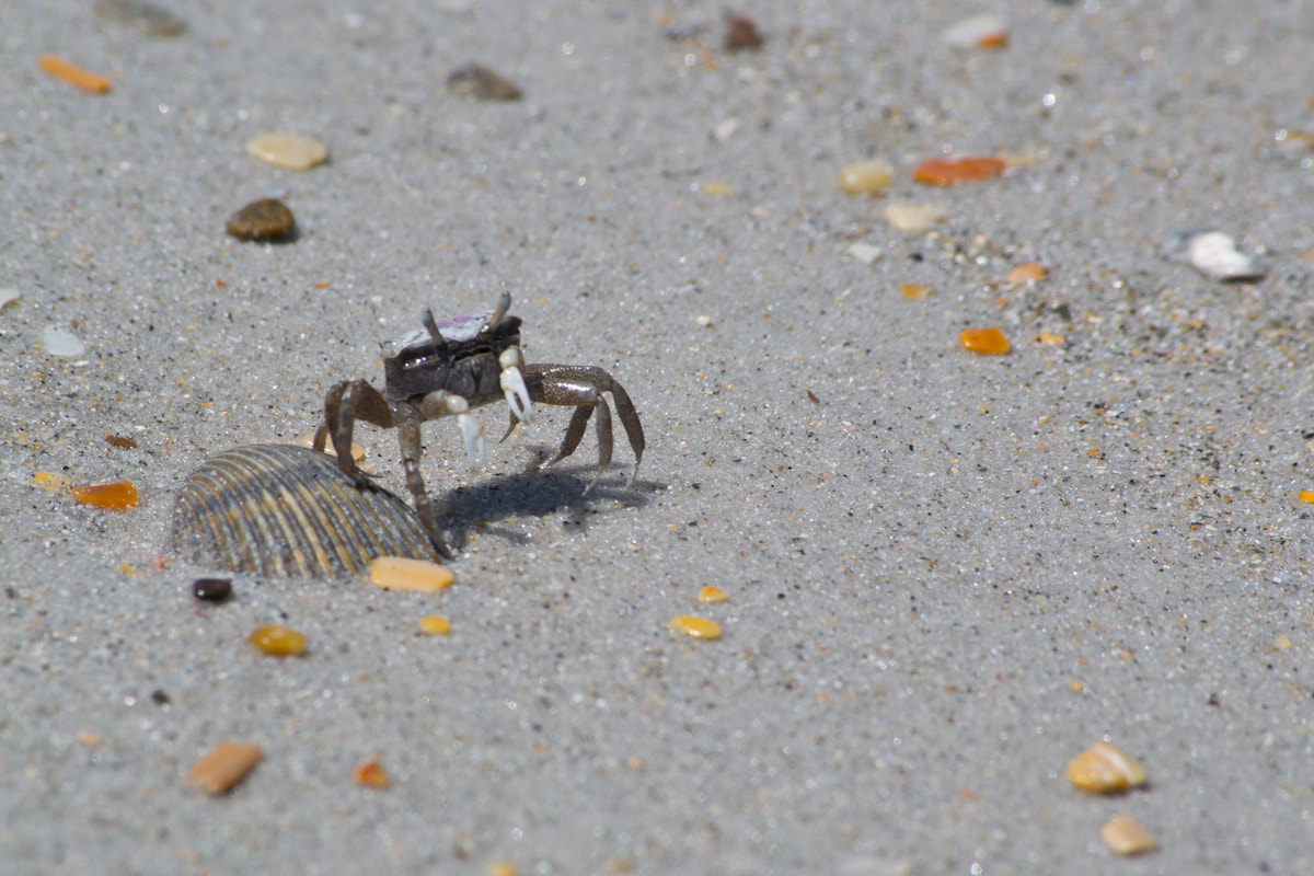 Photograph A Little Crabby by Ted Giro on 500px