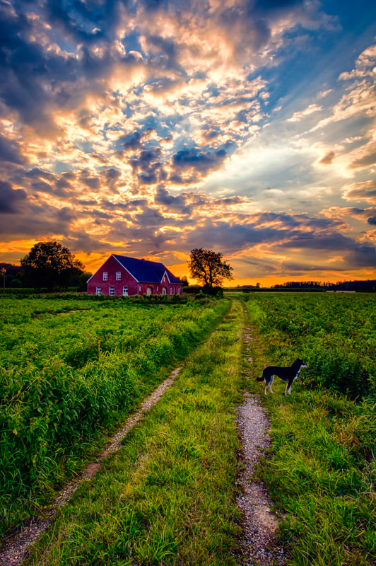 The small farm with my dog