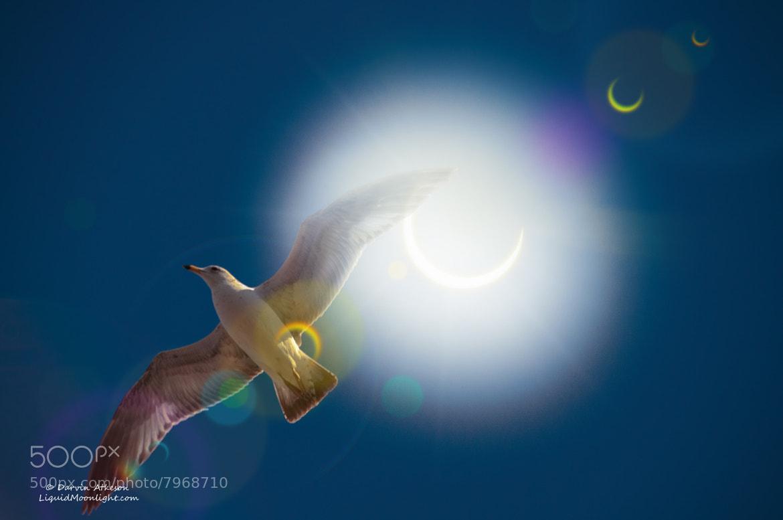 Photograph Solar Flight - Eclipse 2012 by Darvin Atkeson on 500px