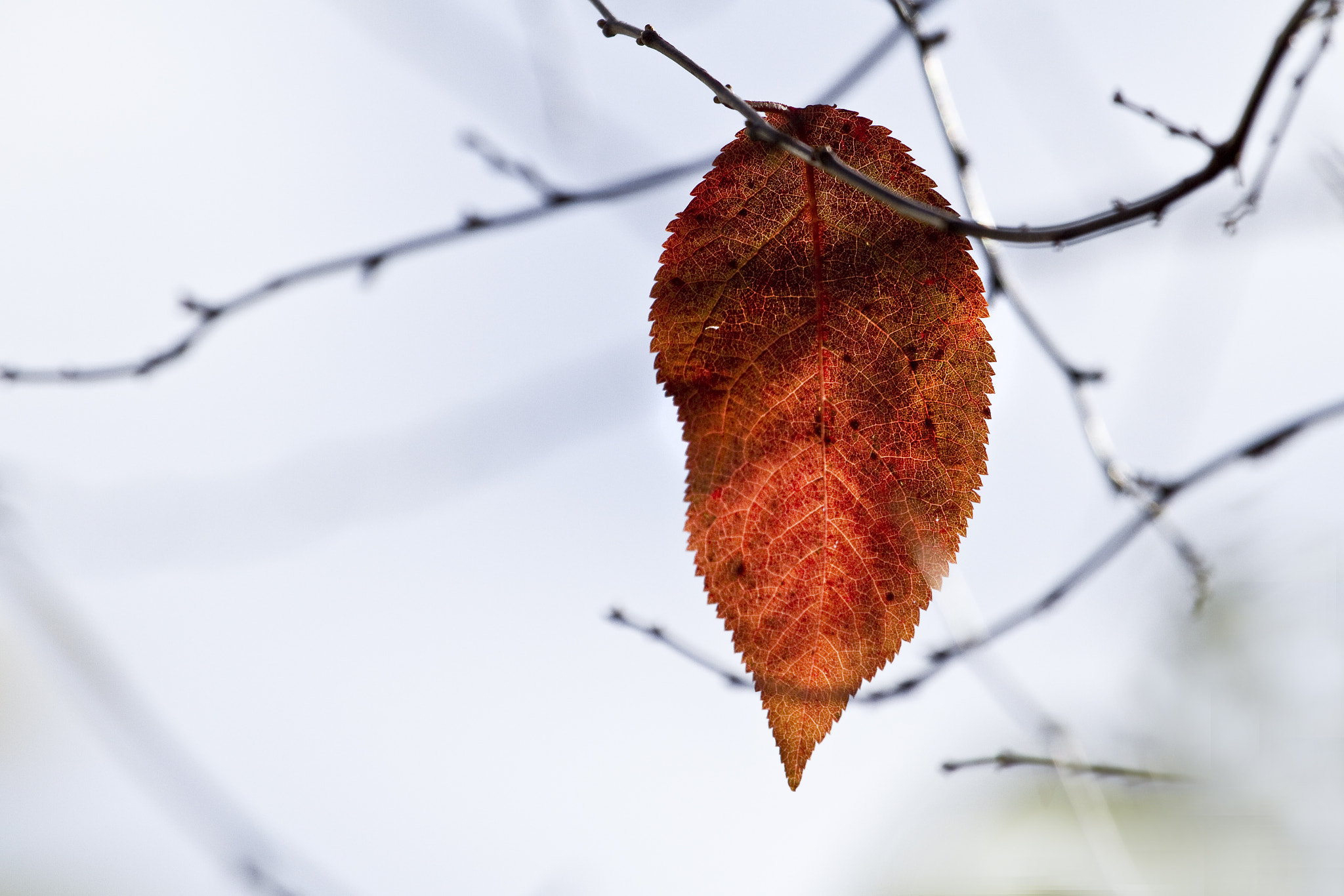 Photograph The Last Leaf by Rajesh Gathwala on 500px