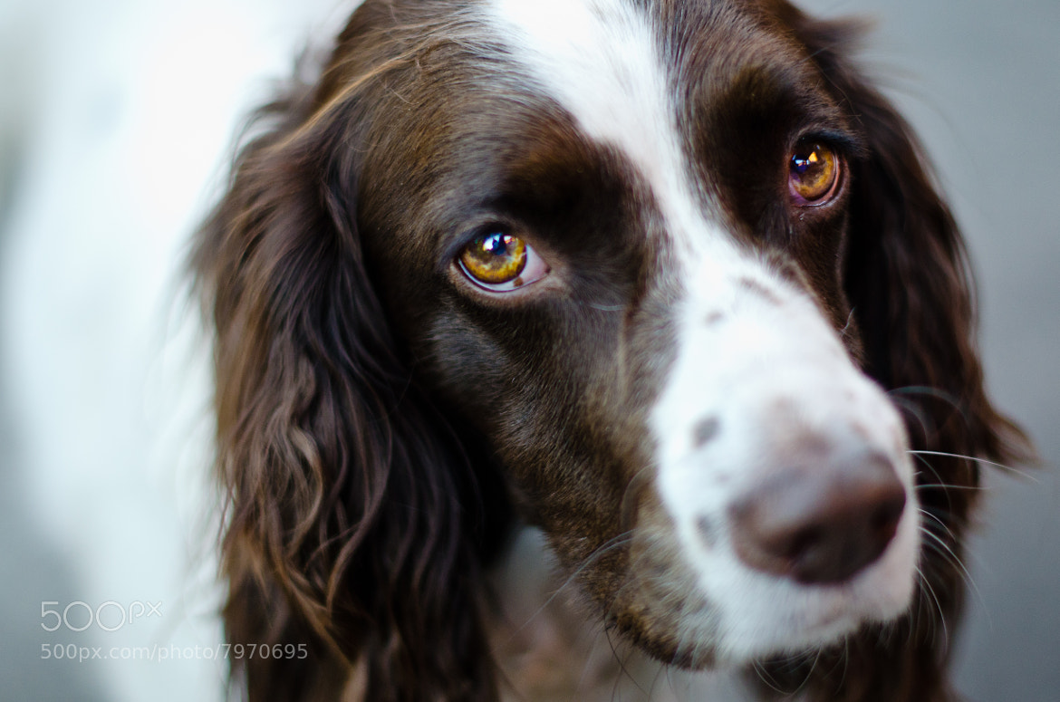 Photograph Eyes by Chris Heald on 500px