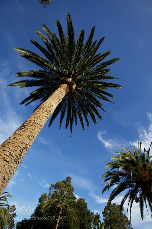 Photograph Palm Drive by Vjeran Pavic on 500px