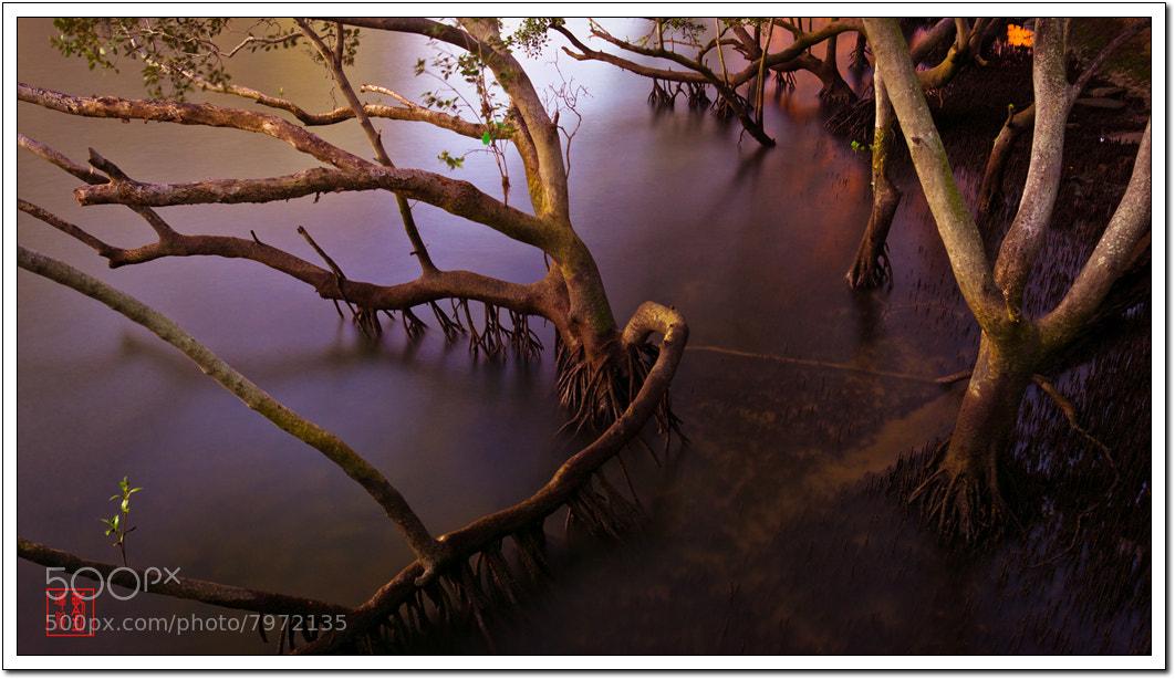 Photograph Mangrove  by Zhangxin Frank  Liu on 500px