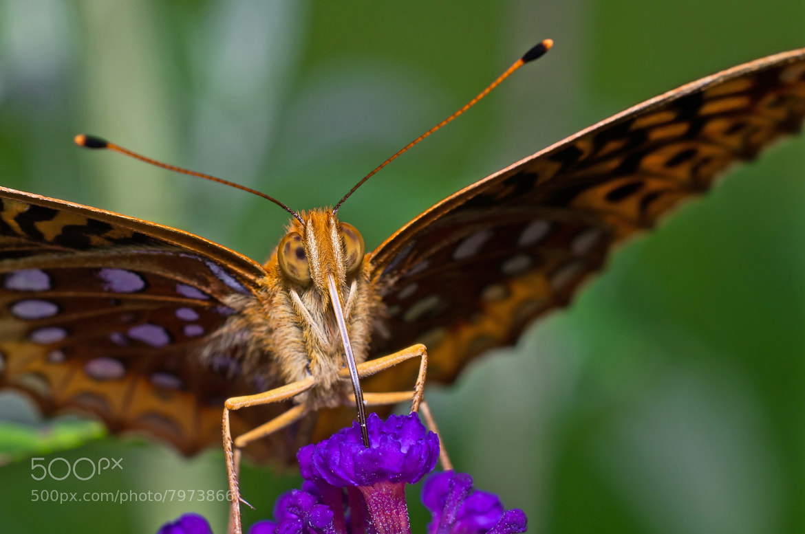 Photograph Butterfly's Close-Up by Lori Coleman on 500px