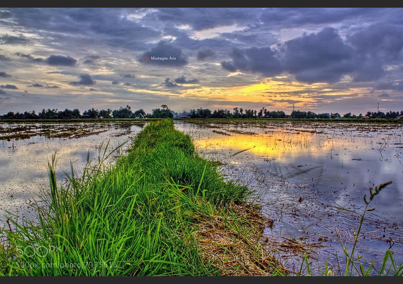 Photograph Paddy Sunset by Mustaqim Aris on 500px