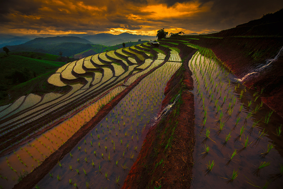 Rice fields in Thailand by juon majeno on 500px.com