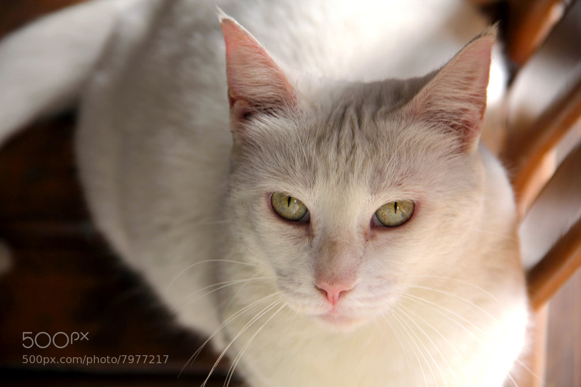 Photograph La loca gata Blanca  by José Antonio García  on 500px