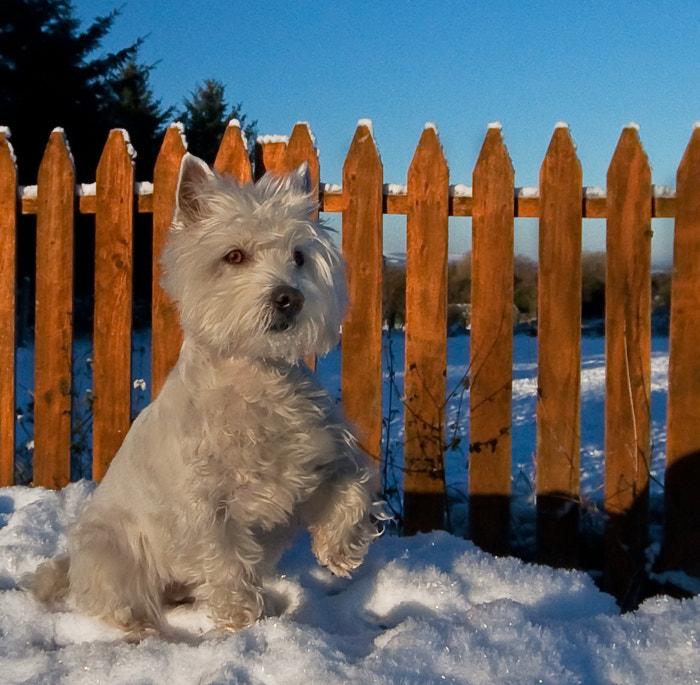Holly Enjoying The Snow