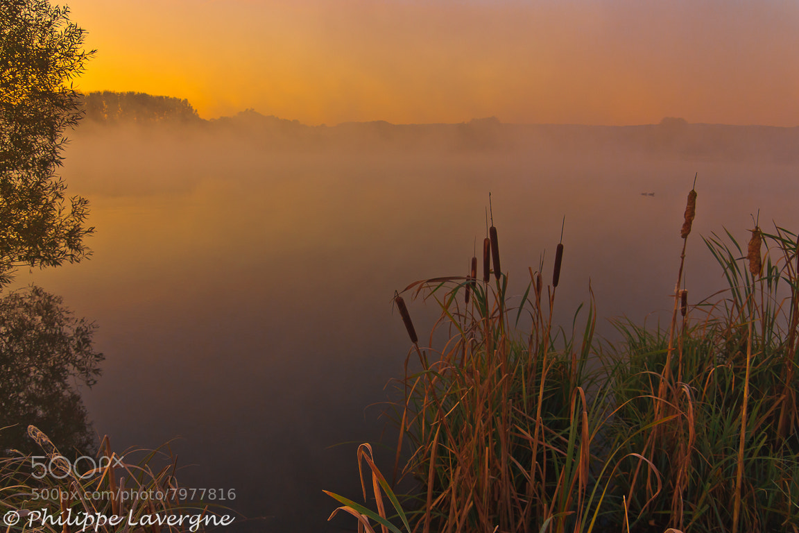 Photograph Misty ambiance  by Philippe Lavergne on 500px