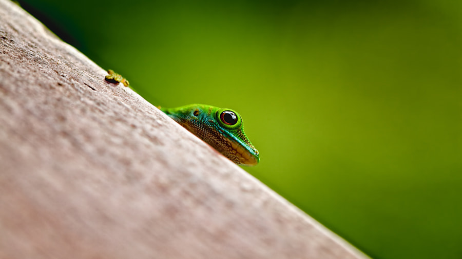 Praslin Skink II by Jan Roesner on 500px.com